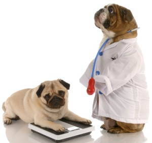 October is Pet Obesity Month -Downtown Animal Care Center